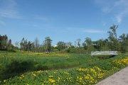 Tiltas per Vyžuonos upelį Vyžuonos parke