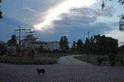 Katinas Dauniškio parke