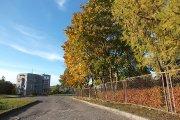 Rudeniniai medžiai netoli Utenos valstybinės maisto ir veterinarijos tarnybos