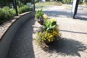 Gėlės J. Basanavičiaus ir Maironio gatvių kampe