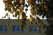 Rudeniniai lapai prie Utenos Adolfo Šapokos gimnazijos