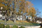 Rudeniniai medžiai prie Utenos kolegijos Medicinos fakulteto