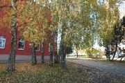 Rudeniniai medžiai prie Utenos Dauniškio gimnazijos