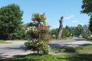 Gėlių medis