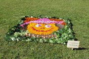 Žydinčios Utenos floristiniai kilimai
