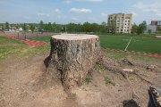 Nupjauto medžio kelmas