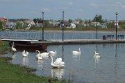 Vandens paukščiai Dauniškio ežere