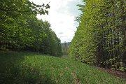 Medžių proskyna netoli Vyžuonaičio ežero