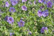 Gėlynas miesto sode