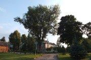 Medis buvusio Utenos dvaro teritorijoje