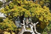 Rudeninis medis Gedimino gatvėje