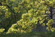 Pavasarinė žaluma