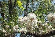 Žydintys augalai Stoties ir Palangos gatvių kampe