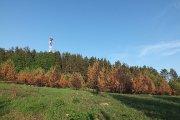 Apdegęs miškelis prie televizijos bokšto