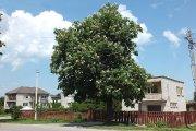 Medis Utenio gatvėje