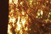 Saulėlydžio žaros