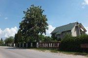 Medis Vilniaus gatvėje