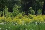 Augalai Krašuonos parke