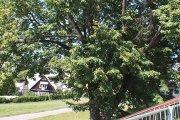 Medis prie viešosios pirties
