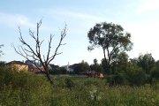 Nudžiuvęs medis