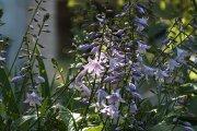 Gėlės miesto sode