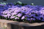 Gėlės Dauniškio parke