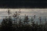 Dauniškio ežeras