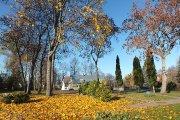 Rudeniniai medžiai buvusio Utenos dvaro teritorijoje