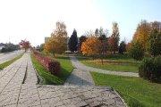 Rudeniniai medžiai prie Utenos Adolfo Šapokos gimnazijos