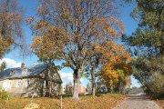 Rudeninis medis buvusio Utenos dvaro teritorijoje