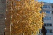 Rudeninis medis Smėlio mikrorajone