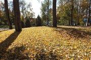 Rudeniniai lapai prie ''Saulės'' gimnazijos