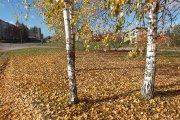 Rudeniniai medžiai prie Aukštakalnio gatvės